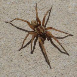 Уничтожение пауков в Куйбышеве
